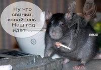 Ну что свиньи, ховайтесь, год Крысы наступает.